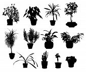 pic of sansevieria  - silhouette of different potted plants vector on white - JPG