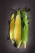 Still Life With Three Indian Corn Ears On Gray Linen Canvas