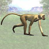 Monkey 04