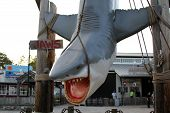Jaws Prop