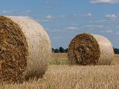 Sheaves Of Rolled Hay