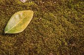 Green Leaves On Moss.green Leaf Pattern On The Moss Surface. Nature Spring Concept.creative Tropical poster