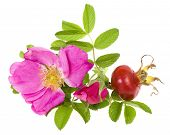 picture of white roses  - Rose hip - JPG