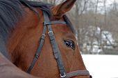 Das Pferd hat durch eine Schulter zurückgeblickt.