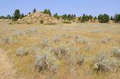 Rosebud Battlefield grassland