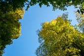Colorful Autumn Trees Against A Clear Blue Sky Trees In Fall As A Symbol For Seasonal Content, Clima poster