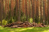 Pile Of Firewood. Preparation Of Firewood For The Winter And Use For Cooking, Firewood Background. A poster