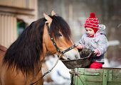 stock photo of foal  - Child feeding a horse - JPG