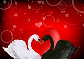 illustration with black and white swans on red background