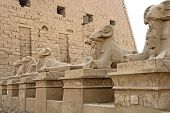 Sphinxes At Precinct Of Amun-re