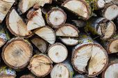 Stack Of Logs. Stack Of Firewood Close Up. Logs Cuts Prepared For Fireplace. Woodpile. Wood For Fire poster