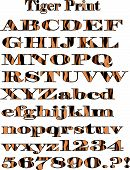 Vector Tiger Pattern Alphabet Print.Eps