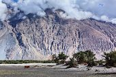 Himalayas and landscape of Nubra valley. Hunber, Nubra valley, Ladakh, India poster