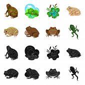 Vector Illustration Of Wildlife And Bog Symbol. Collection Of Wildlife And Reptile Stock Symbol For  poster