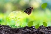 Glowing Earth Globe On Soil With Butterfly In The Nature.   World Environment And Save Environment.  poster