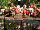 Zoo Of Dresdsen