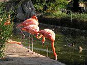 Zoo City Of Dresden.