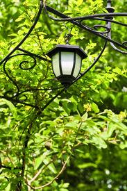 stock photo of light fixture  - Wrought iron arbor with lantern in lush green garden - JPG