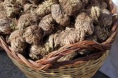 stock photo of jericho  - A lot of Jericho roses in a wicker basket - JPG
