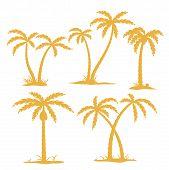 Palm Konturen