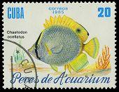 Cuba-circa 1985: A Stamp Printed In Cuba Shows Fish Chaetodon Ocellatus, Circa 1985