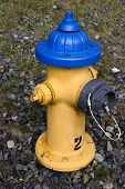 Blue cap yellow fire hydrant
