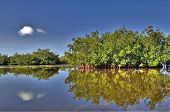 Estuary And Mangroves