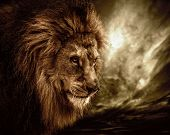 stock photo of animal teeth  - Lion against stormy sky - JPG