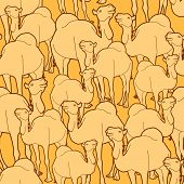 Camel Herd Pattern