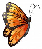Ilustração de uma borboleta colorida com fundo branco