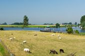 Dutch landscape with water boats and sheep in Friesland