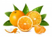 Vector fresh ripe oranges with leaves.