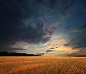 Wheat Field And Sunset Clouds