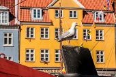 Seagull On Historic Ship In Front Of Colorful House