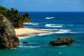 Beach Orchid bay