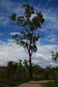 Single Tree Along Walking Path