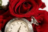 Beautiful Red Rose And Antique Pocket Watch