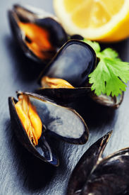 foto of sult  - group of boiled mussels in shells - JPG