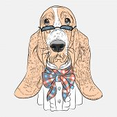 Vector Funny Dog Basset Hound