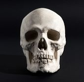 stock photo of cranium  - Realistic model of a human skull with teeth frontal view on a black background in a medical science or Halloween horror concept - JPG
