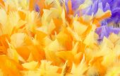 Yellow Purple Feather Background