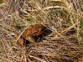 Frog Toad In The Meadow