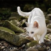 White Cat In Free Nature