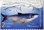 Asp Fish Stamp