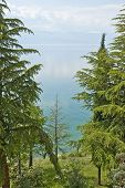 picture of macedonia  - Coniferous Trees in the shore of lake Ohrid - JPG