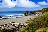stock photo of driftwood  - Beach with driftwood on the Pacific Ocean - JPG