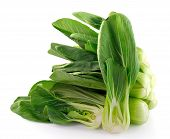 Bok Choy (chinese Cabbage) Isolated On White Background