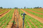Irrigating Crops With Impact Rotor Sprinklers