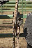 Bull Rope