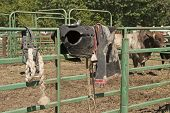 picture of bull-riding  - Cowboy bull riding gear waits to be used at a bull riding event  at a country rodeo - JPG